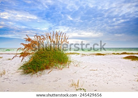 Summer landscape with Sea oats and grass dunes on a beautiful fine sandy Florida beach in late afternoon with blue sky  - stock photo