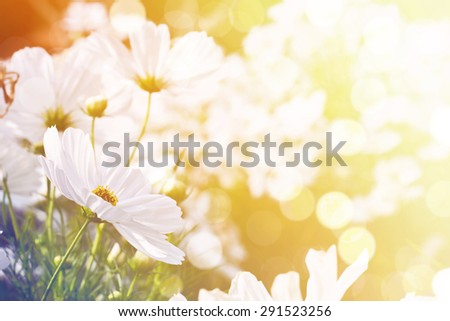 Sweet dreamy flower background, Soft Focus