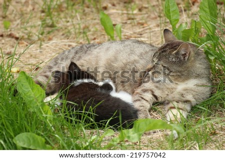 Tabby with defocused black and white kitten lying in grass. - stock photo