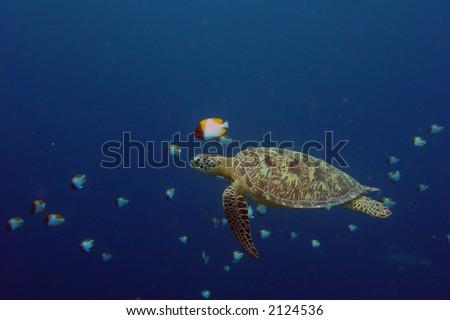 Taken on a dive, sipadan - stock photo