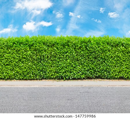 Tall hedge with the part of the gravel road - stock photo