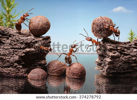 team of ants work constructing dam, teamwork                              - stock photo