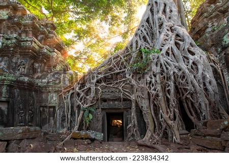 The ancient ruins and tree roots,of a historic Khmer temple in the temple complex of Angkor Wat in Cambodia. Travel Cambodia concept. - stock photo