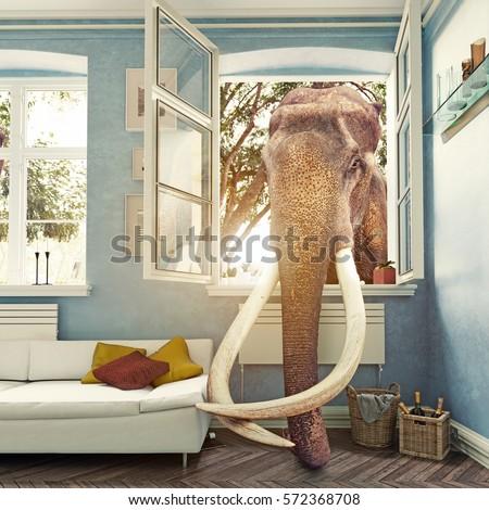 Elephant Room Window Photo Combination Concept Stock Photo ...