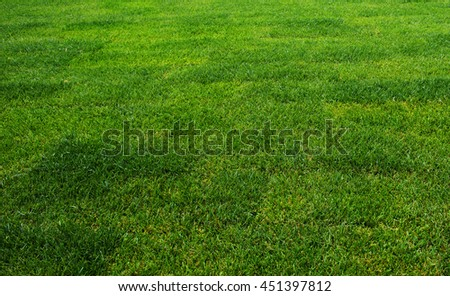 The grass at the stadium. Fresh green, cropped