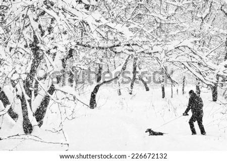 The man conducts a dachshund on a lead in a winter garden. - stock photo