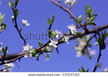 цветение почки весна скачать