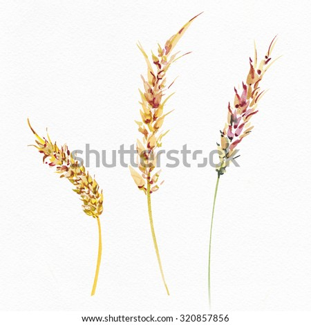 """The ripe ears of wheat drawn with a water color. Watercolor autumn surface. Album """"Autumn surfaces"""". - stock photo"""