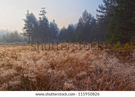 The road in the bright autumn wood. Frosty morning. A grass and the wood in hoarfrost and ice - stock photo