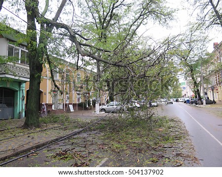 The storm caused severe damage to the electrical wiring and blocking roads with fallen trees. Under reconstruction. Odessa, Ukraine, October 13, 2016