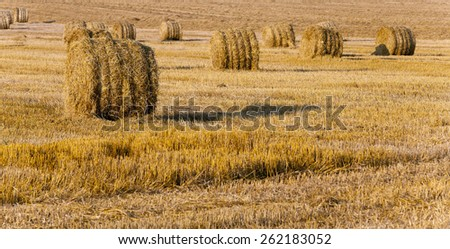 the straw put in a stack after wheat harvesting - stock photo