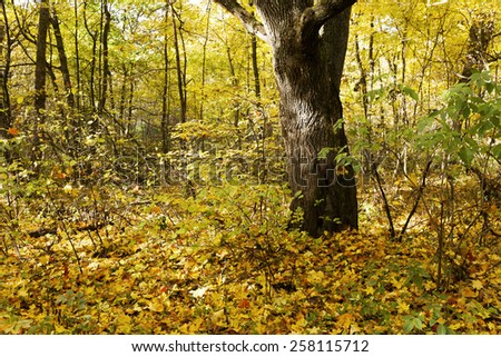 the trees growing in the territory of the wood (park) in an autumn season - stock photo