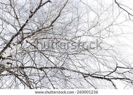 the trees photographed in a winter season.