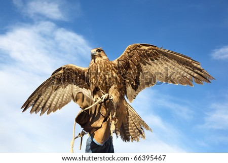 The young Golden eagle, blue sky background - stock photo
