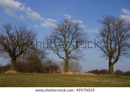 Three old sweet-cherry trees without leaves - stock photo