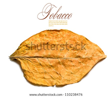 tobacco leaf closeup on the white background - stock photo