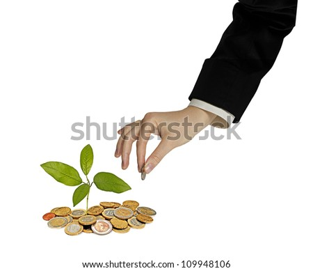 tree growing from pile of coins - stock photo