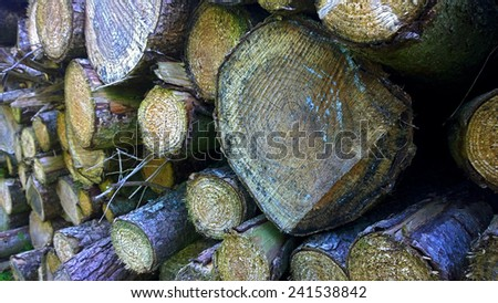 2014 Tree logs stacked lumberjack warmth fuel for camp fire and log burners - stock photo