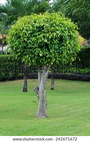 tree on the green garden - stock photo