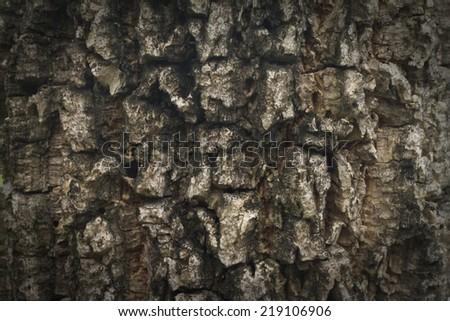 tree texture - stock photo