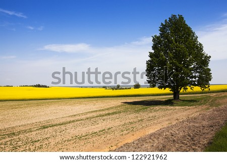 tree with the green foliage, growing on an agricultural field. the colza blossoms on a background - stock photo