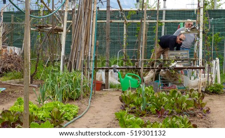 Kitchen Garden Stock Images, Royalty-Free Images & Vectors ...
