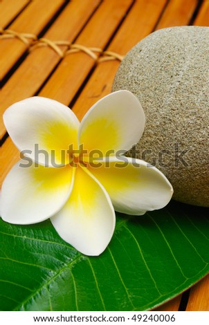 tropical frangipani flower