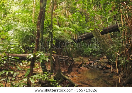 Tropical rainforest on the Ko Lanta island east coastline, Thailand - stock photo