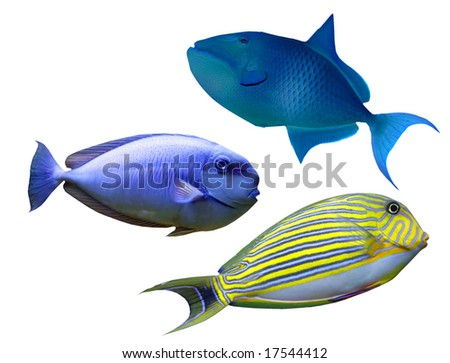 Tropical reef fish - stock photo
