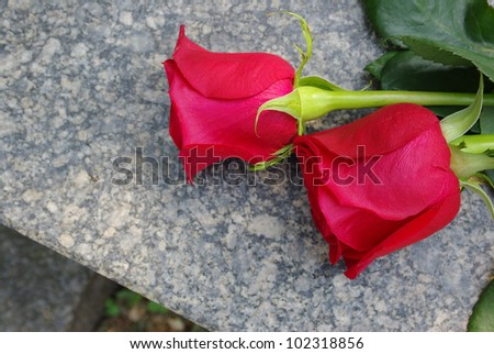 Two red roses on a grave - stock photo