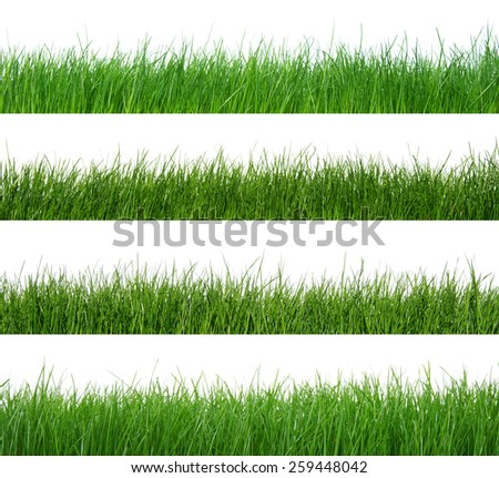 unfocused green grass isolated on white - stock photo