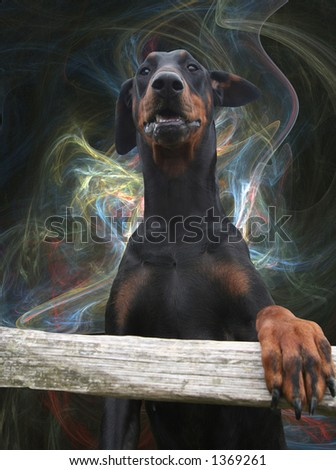 upper part of a Doberman / Dobermann standing upright against abstract - stock photo