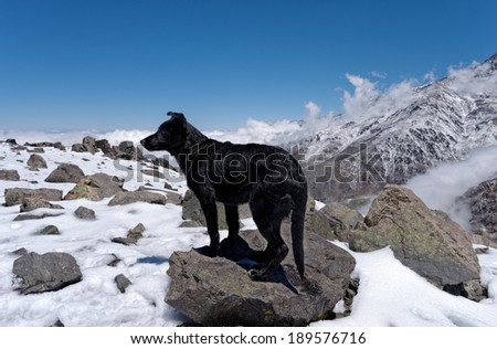 Vallecitos provincial park, Mendoza, Argentina. Dog on the summit of Lomas Blancas mount   - stock photo