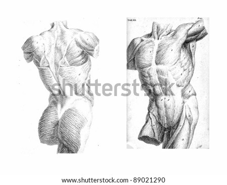 2 Views of the human torso, muscles and internal organs  from The anatomy of the human body by  William Cheselden in 1763. - stock photo