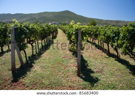 vineyards in Medjugorie, Bosnia and Herzegovina - stock photo