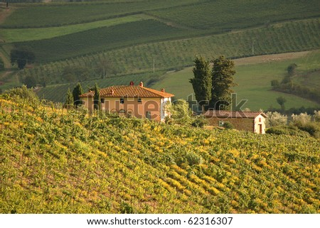Vineyeard in Chianti, Toscany, Italy, famous landscape - stock photo