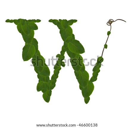 """W"" Vine alphabet - stock photo"