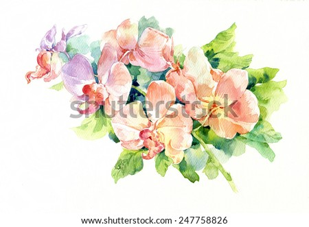 watercolor painting of flower on white background - stock photo