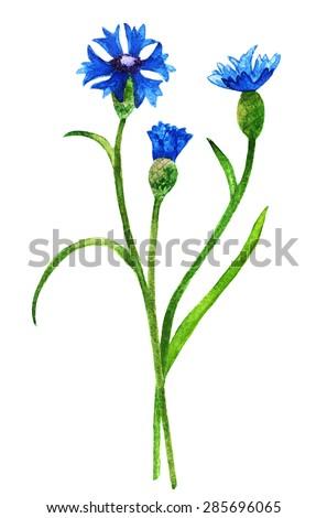 watercolor wild blue field flowers cornflower stock illustration rh shutterstock com