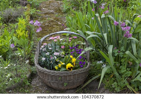 wattled basket with flowers as garden decoration - stock photo
