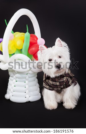 West Highland White Terrier sitting near wicker basket