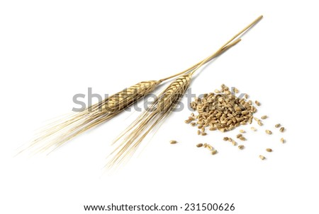 Wheat ears and wheat grains isolated on white - stock photo