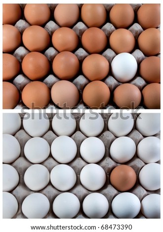 white and brown eggs collage duality, representing visible minority - stock photo