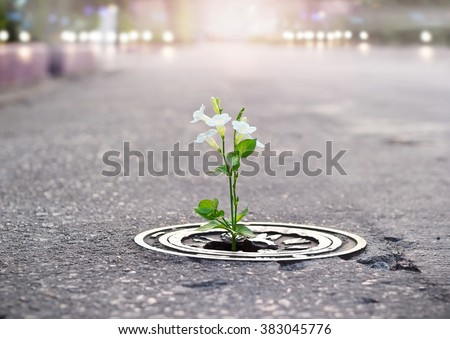 white flower growing on crack street, soft focus, filtered effect - stock photo
