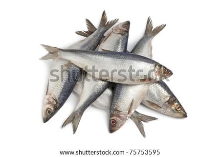 Whole fresh raw herring on white background - stock photo