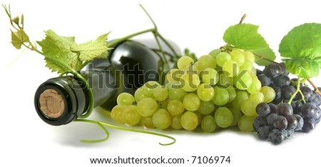 wine bottle and young grape vine branch. shallow depth of focus - stock photo
