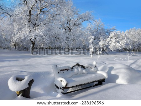 Winter nature, scenery with trees and bench  - stock photo