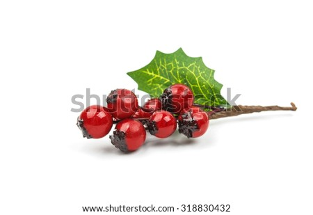 winterberry Christmas branch with red holly berries - stock photo