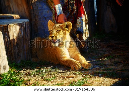 woman with ornamental dress and gold jewel playing with lion cub in nature - stock photo