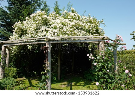 Wooden pergola gazebo in a beautiful blooming garden full of flowers and green plants                               - stock photo